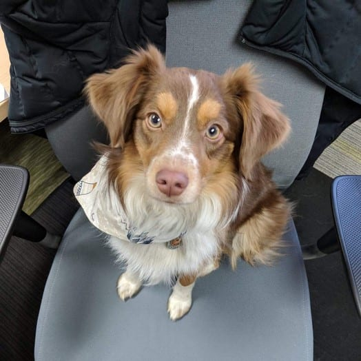 dog on a chair at the office
