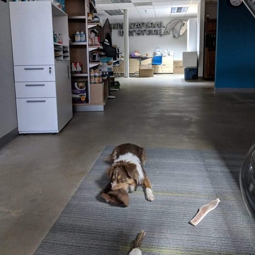 dog playing on a mat in the office