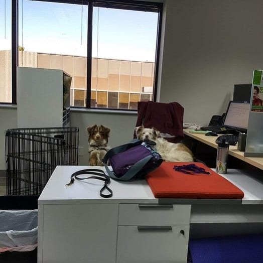 two dogs in an office